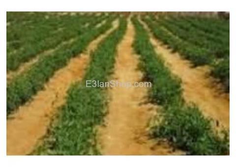 20 فدان زراعيه واستثماري وقابله للتجزئه كامله المرافق